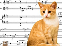 What Music Do Cats Like